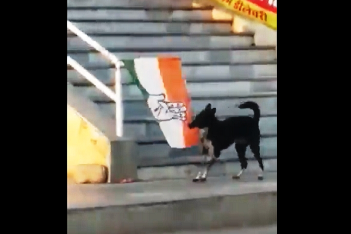 Watch: Street Dog Tears Down Congress Flag From Staircase Railing, Leaves It Lying On The Ground