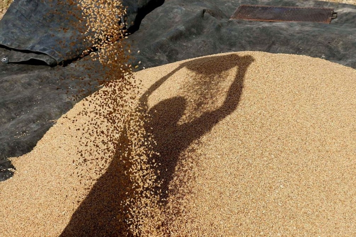 Modi Government Raises Wheat Import Duty To 40 Per Cent To Support Farmers Overcome Price Distress