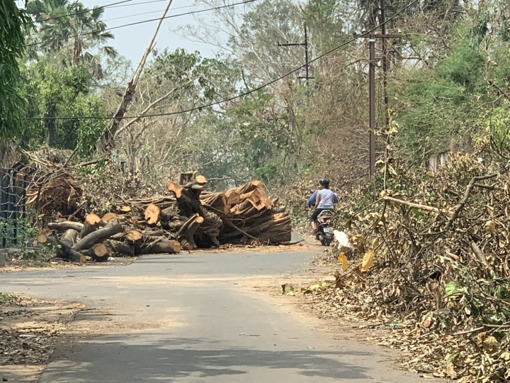 Fani Fury: Bhubaneswar Lost Over 10 Lakh Trees Due To Cyclone Impact