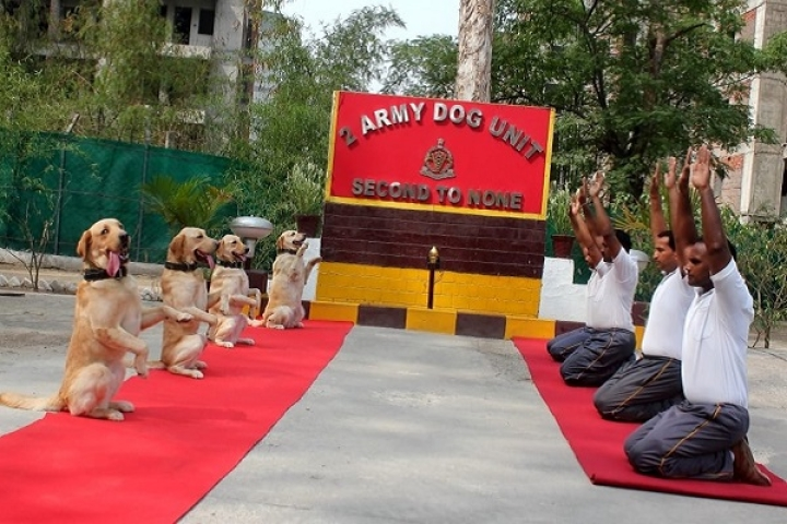 Watch: Dog Units Of Indian Armed Forces Perform Yoga Alongside Their Human Counterparts