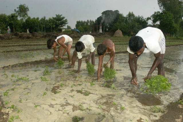 South-West Monsoon: How Indian Agriculture Is Faring This Kharif Season