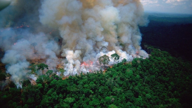 Brazil's President  Bolsonaro Suggests  NGOs May Have Been Behind  Massive Wildfires In Amazon Rainforest