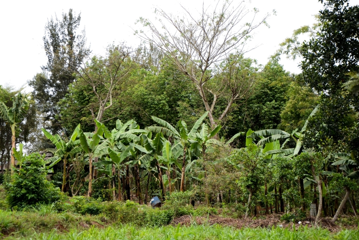 Indian Farmers Would Do Well To Invest In Agroforestry