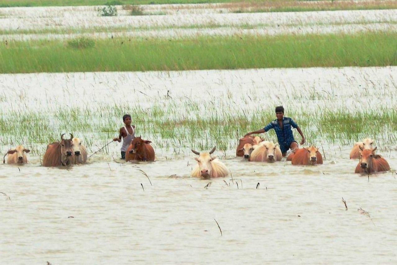 Flooded fields in Assam (Pic Source: @Twitter)
