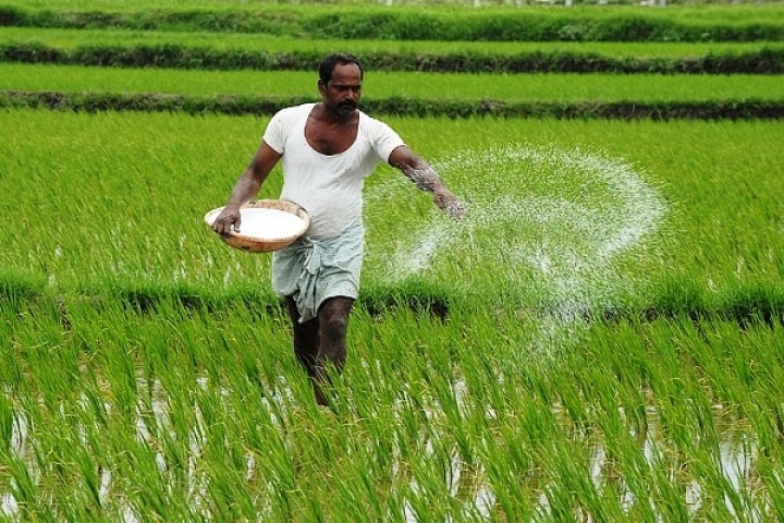 Green Shoots: Economy Stands To Gain As Rabi Season Sowing Set For New Record On Higher Support Price