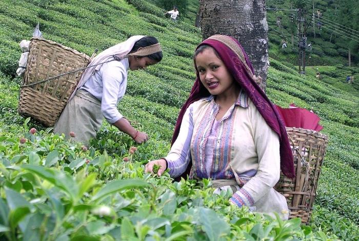 How World's Biggest Black Tea Producer India Has Slipped Behind Kenya And Sri Lanka In The Global Market