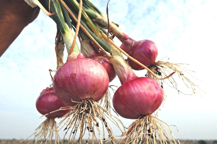 Why Are Farmers Upset Over Ban On Onion Export And Fixing Of Stock Limit