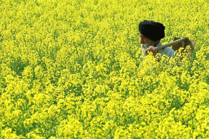 How Excess Post-Monsoon Rains In The Country Are Set To Boost Production Of Rabi Crops