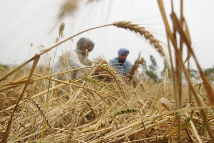 India Could Have Been An Agri Export Superpower, But Here's Why It Is Still Stuck At The Bottom
