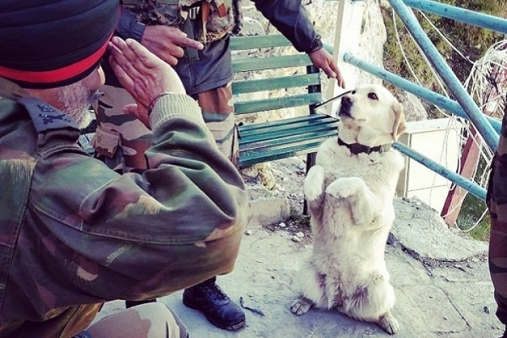 Honouring India's Four Legged Heroes: Soon National War Memorial For Martyred Service Animals
