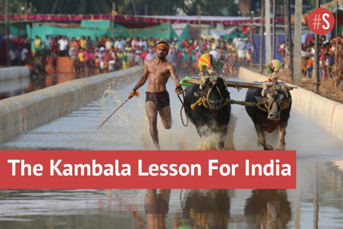 Indic Culture Kept Kambala Going; Now It's Time For The 'System' To Catch Up