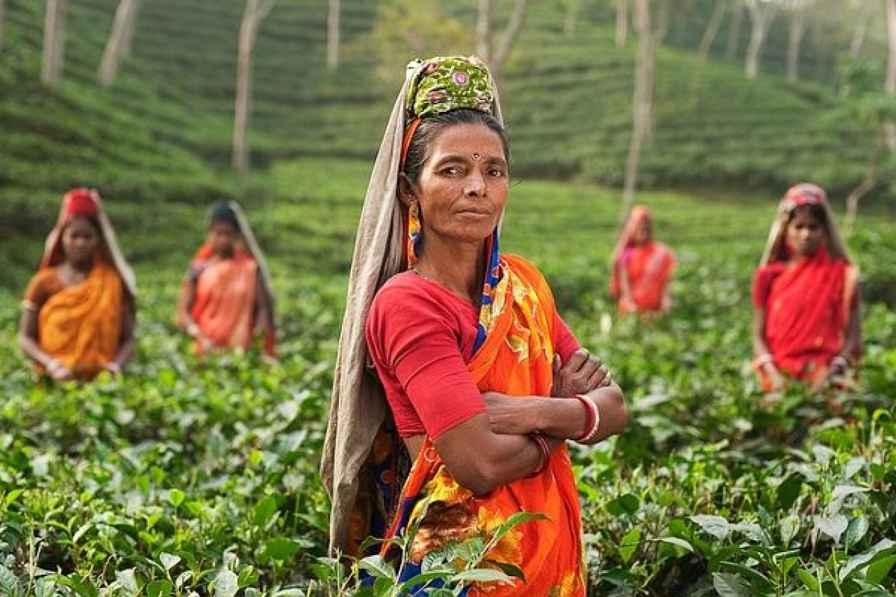 representative image (Source: https://pixabay.com/photos/person-woman-india-fields-plantage-690245/)