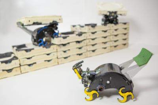 These self-organizing robots are inspired by termite colonies