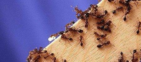 'Digital ants' check networks for viruses