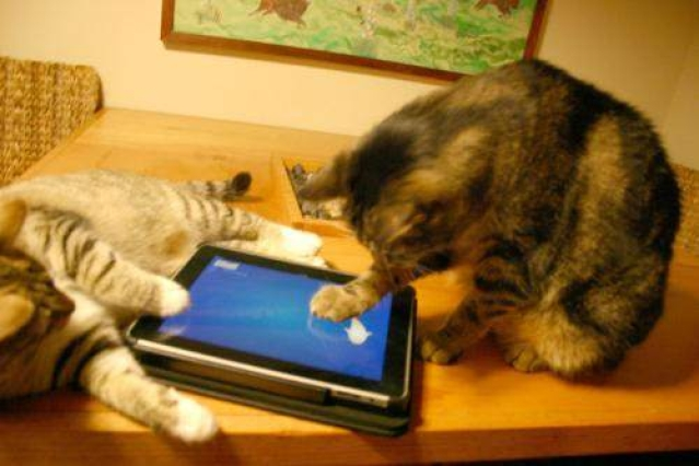 Cats get into gaming with tablet games from Friskies