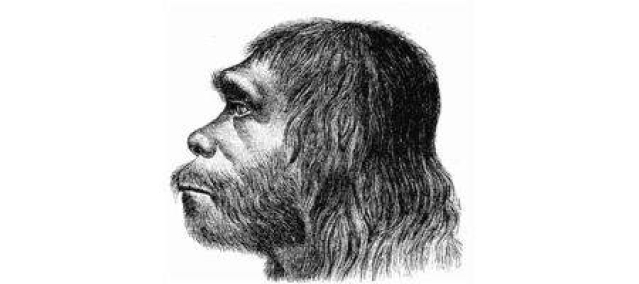Big eyes gave Neanderthals less room to think