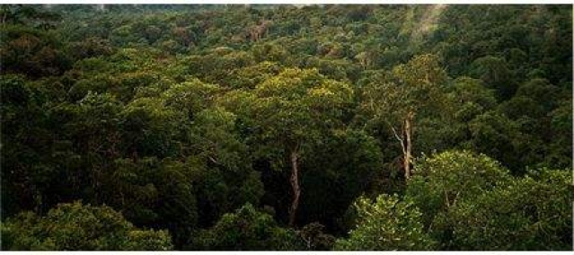 Amazon trees could survive global warming