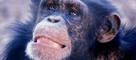New-found gene separates man from apes