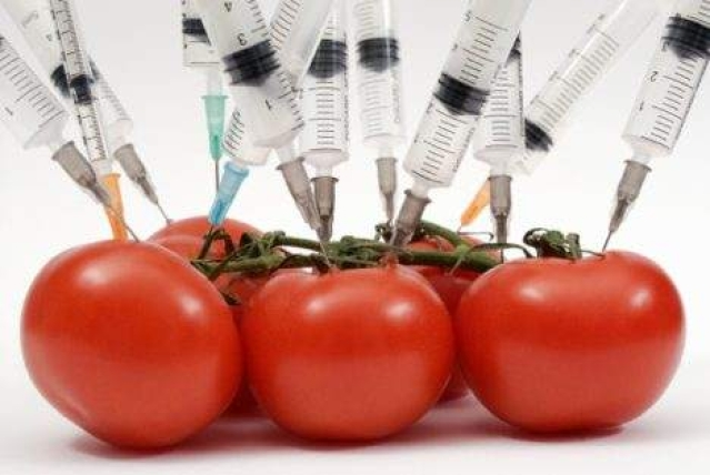 Study: GMO food causes organ disruption in animals