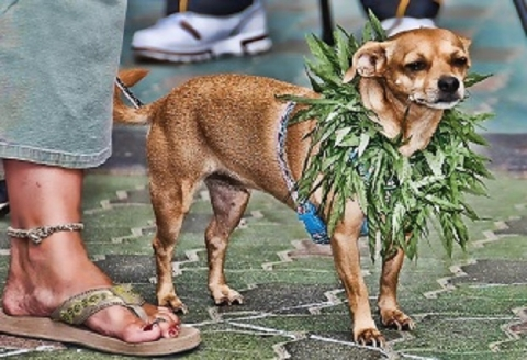 5 Myths About Giving CBD To Pets