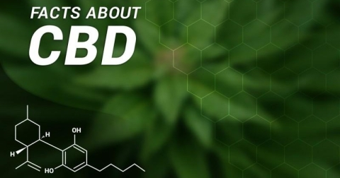 23  Must Know Facts About CBD Oil