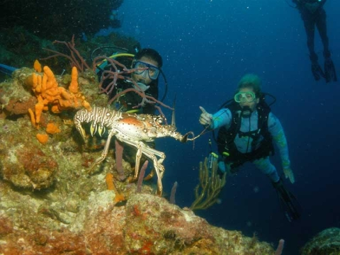 All You Need To Know About Scuba Diving In Cozumel