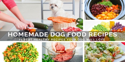 11 best healthy homemade dog food recipes your dog will love forumfinder Images