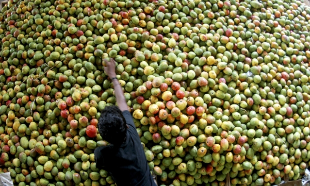 <!--StartFragment-->A vendor arranges mangoes at a fruit market in the southern Indian city of Chennai. (Photo: Reuters)<!--EndFragment-->