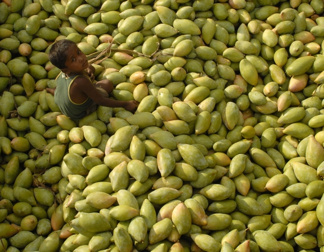 <!--StartFragment-->A child sits on a heap of mangoes at a fruit wholesale market in Kodur village, about 650 km southof Hyderabad. (Photo: Reuters)<!--EndFragment-->
