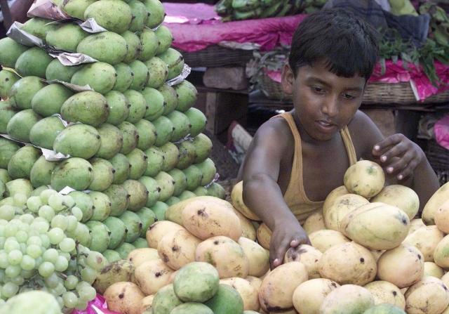 <!--StartFragment-->Twelve-year-old Mohammed Sajjad arranges mangoes he will sell to office-goers during lunchtime in Calcutta. (Photo: Reuters)<!--EndFragment-->