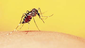 In Africa, malaria kills a child every minute