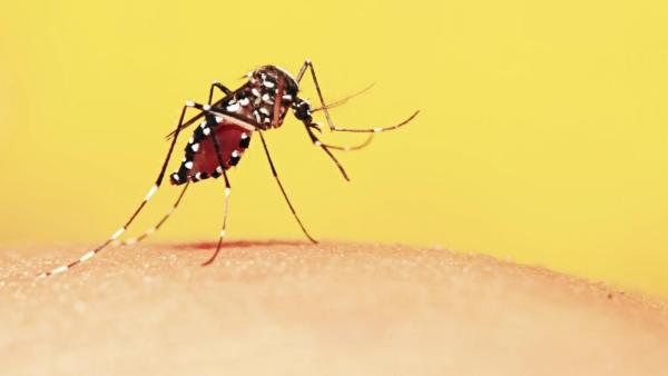 Praveen Sharma from east Delhi died of cerebral malaria at Safdarjung hospital. (Photo: iStock)