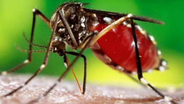 It has taken the deaths of two children in just one week for Delhi's powers that be to wake up to the dengue outbreak. (Photo: iStock)