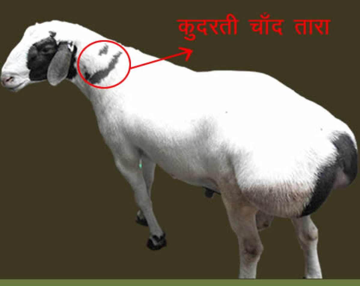 Who Gets Whose Goat? This Eid, Book Your Quality Bakra
