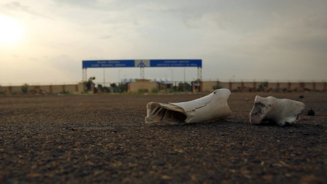 Bones of dead animals lie on a road outside the Jaisalmer Airport in Rajasthan. (Photo: Reuters)