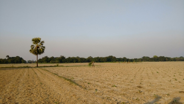 A small patch of green flourishes with the help of water pumps, but a large part of Irshad's tobacco crop is perishing for want of rain. (Photo: <b>The Quint</b>)
