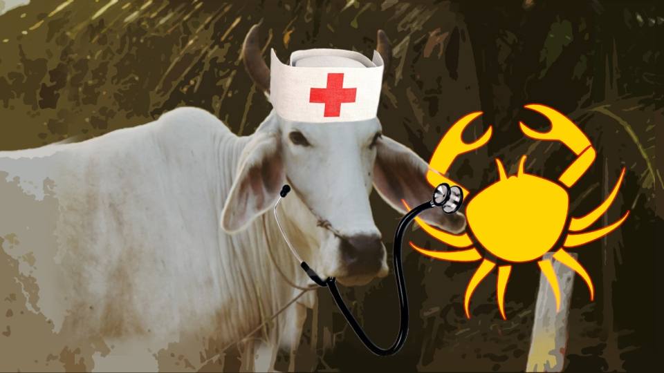 This Hospital Claims to Cure Cancer With the Help of Cows
