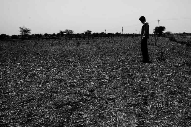 A farmer inspects his damaged soyabean crop after a prolonged drought in the village of Murud Akola in Marathwada. (Photo: Ameya Marathe, curated by Nikhil Inamdar)
