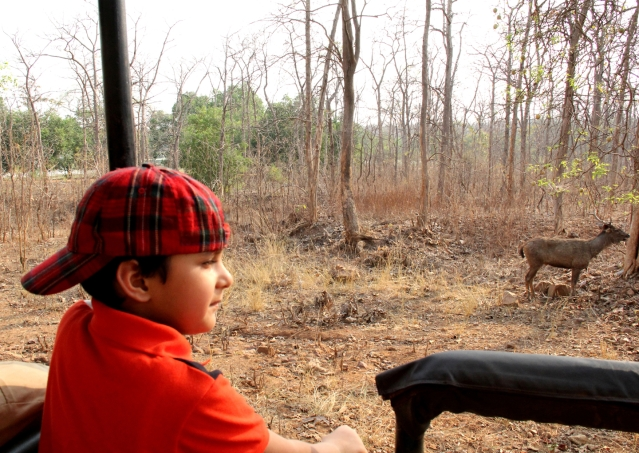 Kazuo at his first forest safari in Tadoba. (Photo Courtesy: Sahar Zaman)