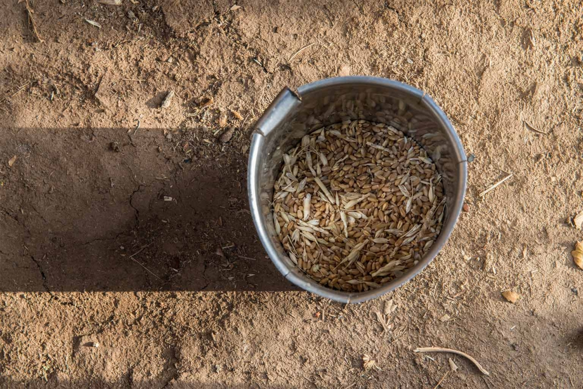 photo essay drought hit village in bundelkhand struggles for life wheat in a jar that kranti uses to make <i>rotis< i