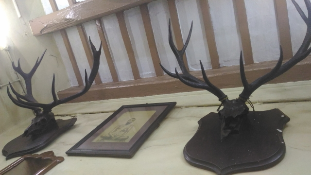 The antlers which were bought from the Nizam of Hyderabad. (Photo: Roshni Sinha)