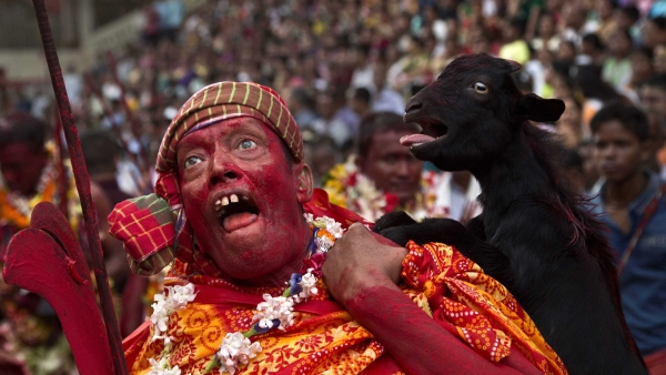 A priest, face smeared with colour and sacrificial blood, carries a goat over his shoulder for sacrifice during the Deodhani festival at the Kamakhya temple in Guwahati.  (Photo: AP Photo/ Anupam Nath)