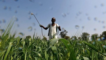 A farmer sprays a mixture of fertiliser and pesticide onto his wheat crop on the outskirts of Ahmedabad.