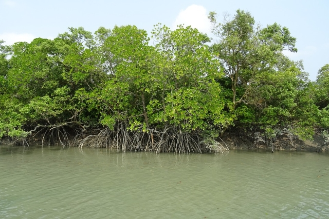 The mangroves provide protection for the region's biodiversity, and absorb significant levels of atmospheric carbon. (Photo: Sarangib/Pixabay)