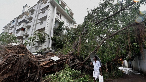 A man walks past an uprooted tree in Chennai on Tuesday after Cyclone Vardah wreaked havoc in the city. (Photo: PTI)