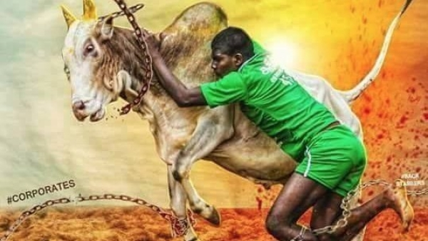 Jallikattu Memes That Only Protesters Will Relate To