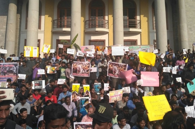 Protesters hold placards protesting the Jallikattu ban in Benglauru on Thursday. (Photo Courtesy: The News Minute)