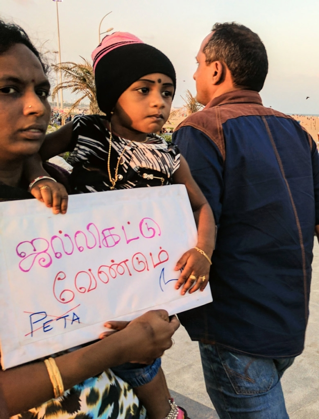 Divya Rajendran, at the Chennai Marina Beach. The placard reads 'We need Jallikattu' (Photo: Vikram Venkateswaran)