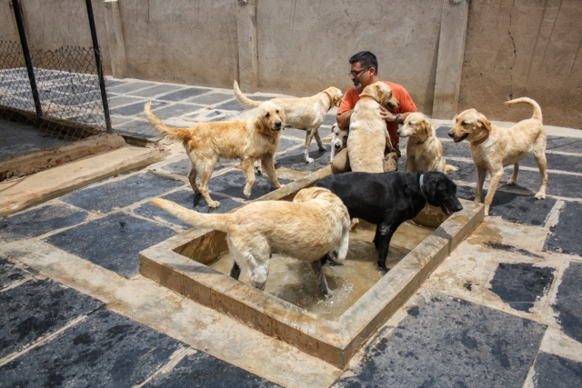 The sanctuary is already home to about 750 abandoned dogs. (Photo Courtesy: Voice of Stray Dogs)