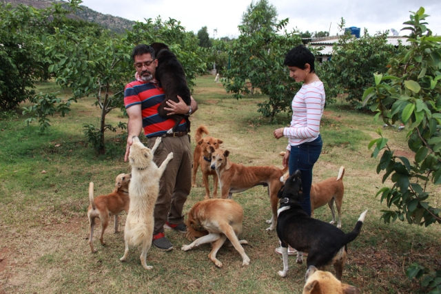 The Bangalore-based software engineer has been running the world's largest citywide dog rescue since four years. (Photo Courtesy: Voice of Stray Dogs)